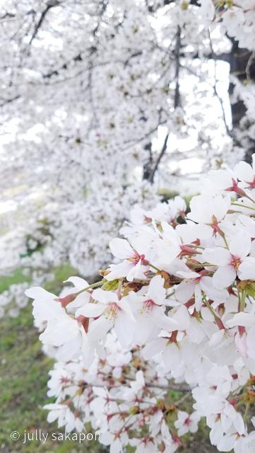 【番外編】古都 京都 鴨川を巡る桜旅 2021.3_1_3