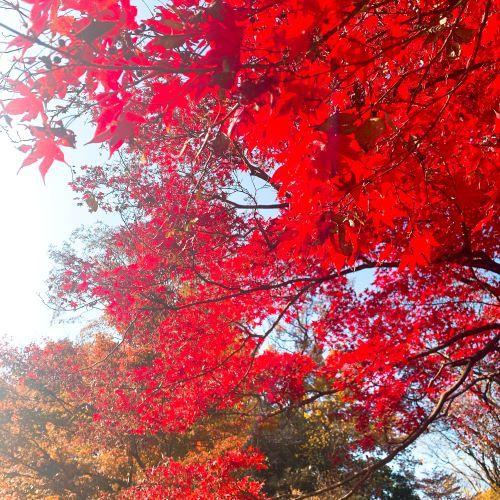 【心奪われる絶景】今が紅葉見ごろの六義園へ_1_3