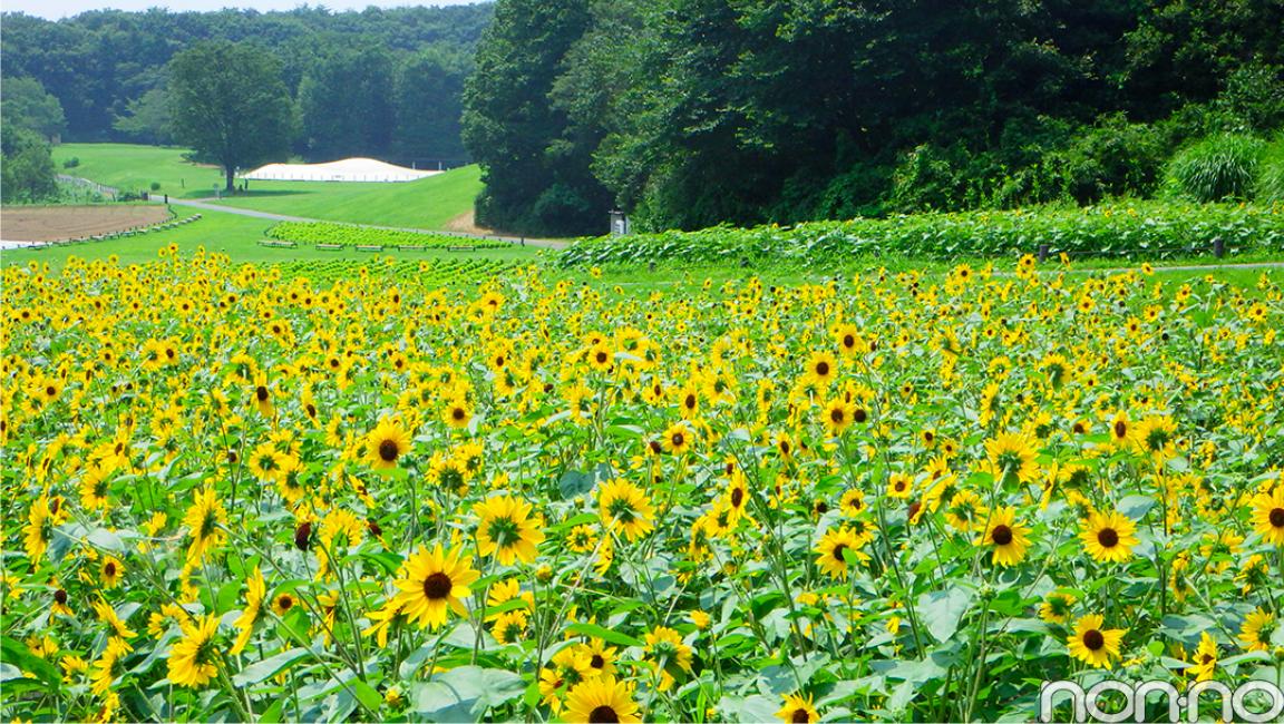 7・8月合併号で優子もロケに♡ 国営武蔵丘陵森林公園の幻想的な花畑に癒されて_1_4
