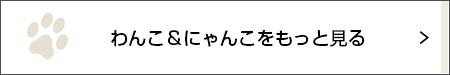 おかえりなさい【にゃんこLIFE まりもちゃん #14】_1_3