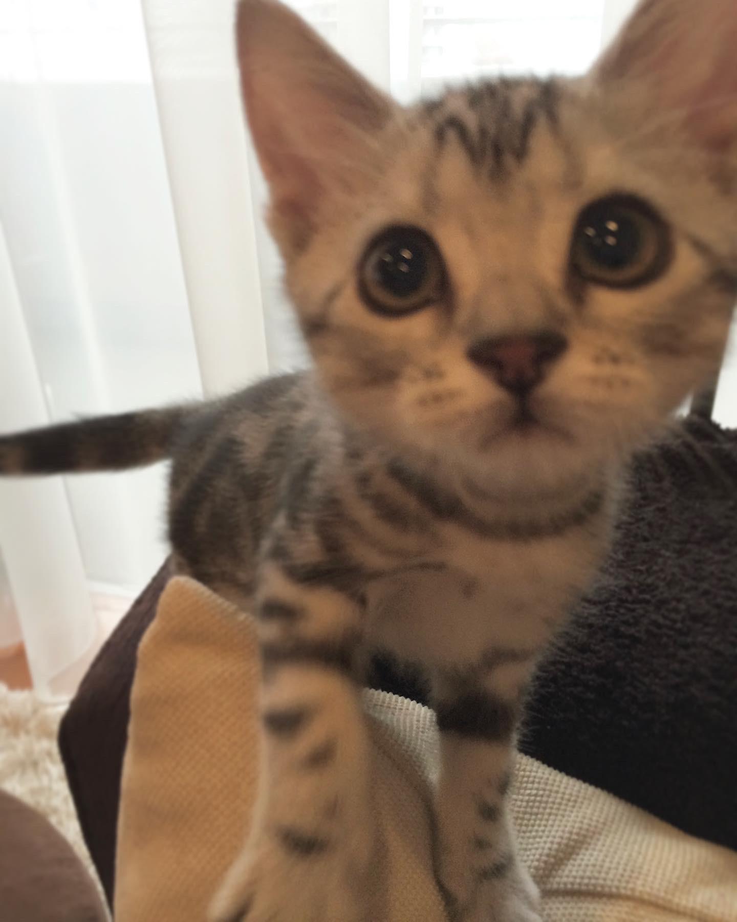 子猫のアラン、近い近い!_1_2