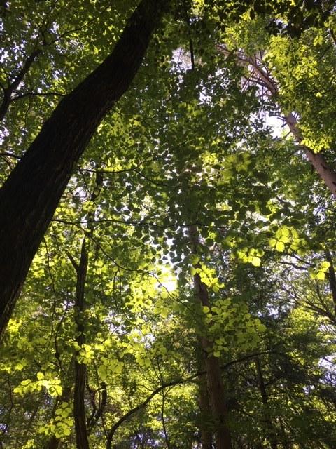 森林浴でリフレッシュ_1_4