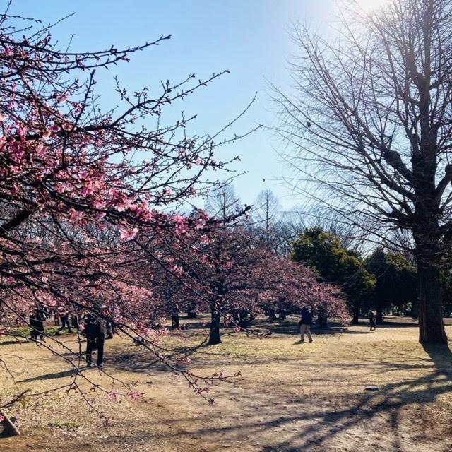 代々木公園の春