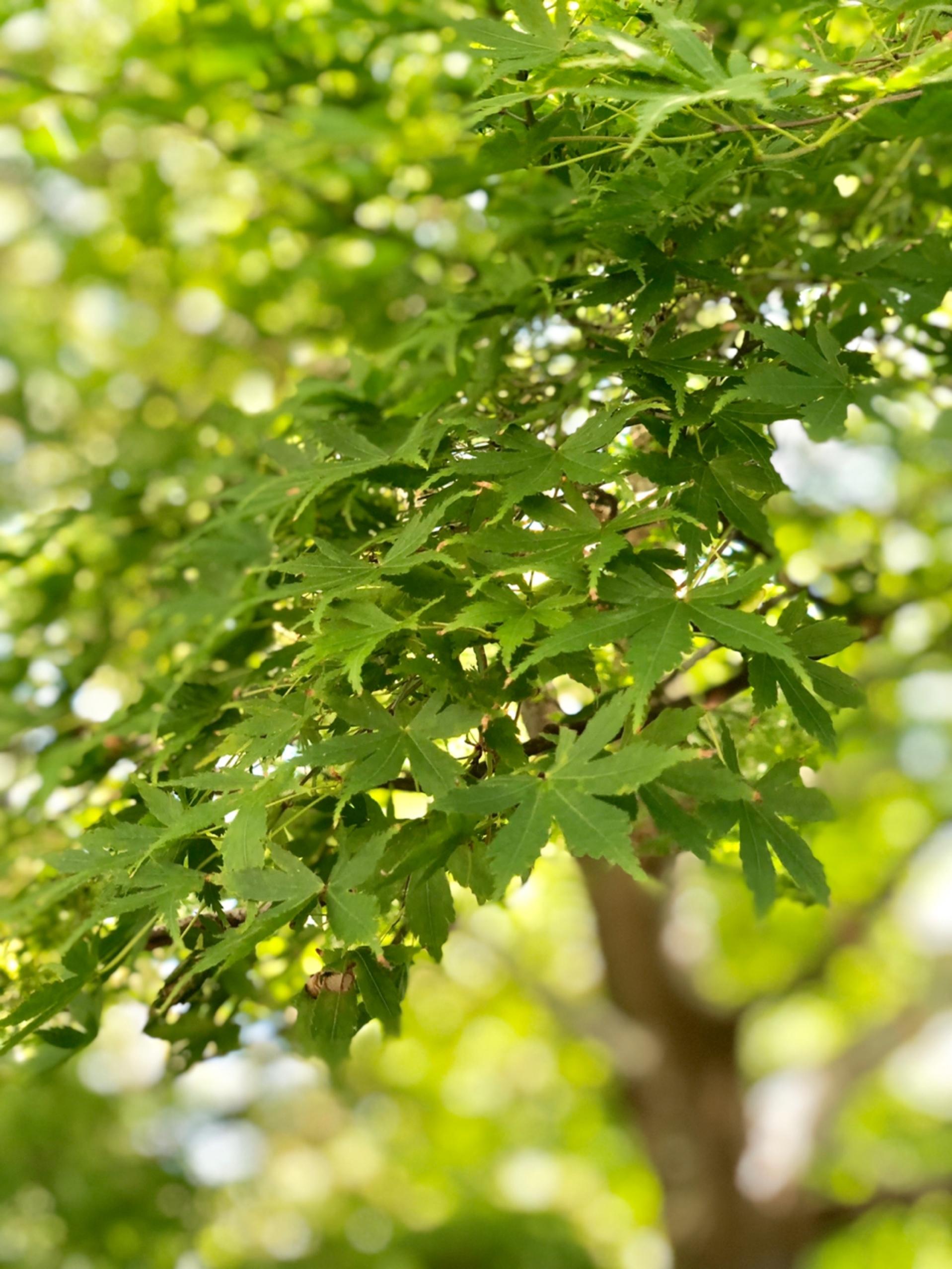 秋の松島_1_3-3
