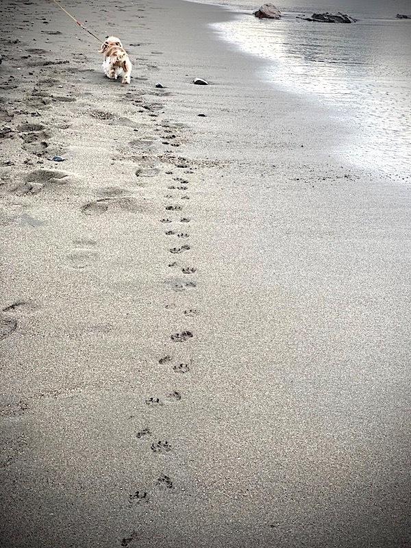 デュアルライフ 海辺の暮らし 海散歩 海岸 湘南