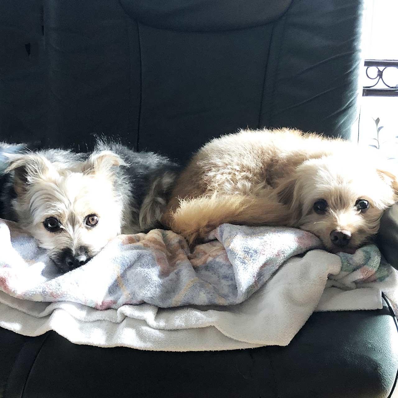 保護犬のポール&ケイト