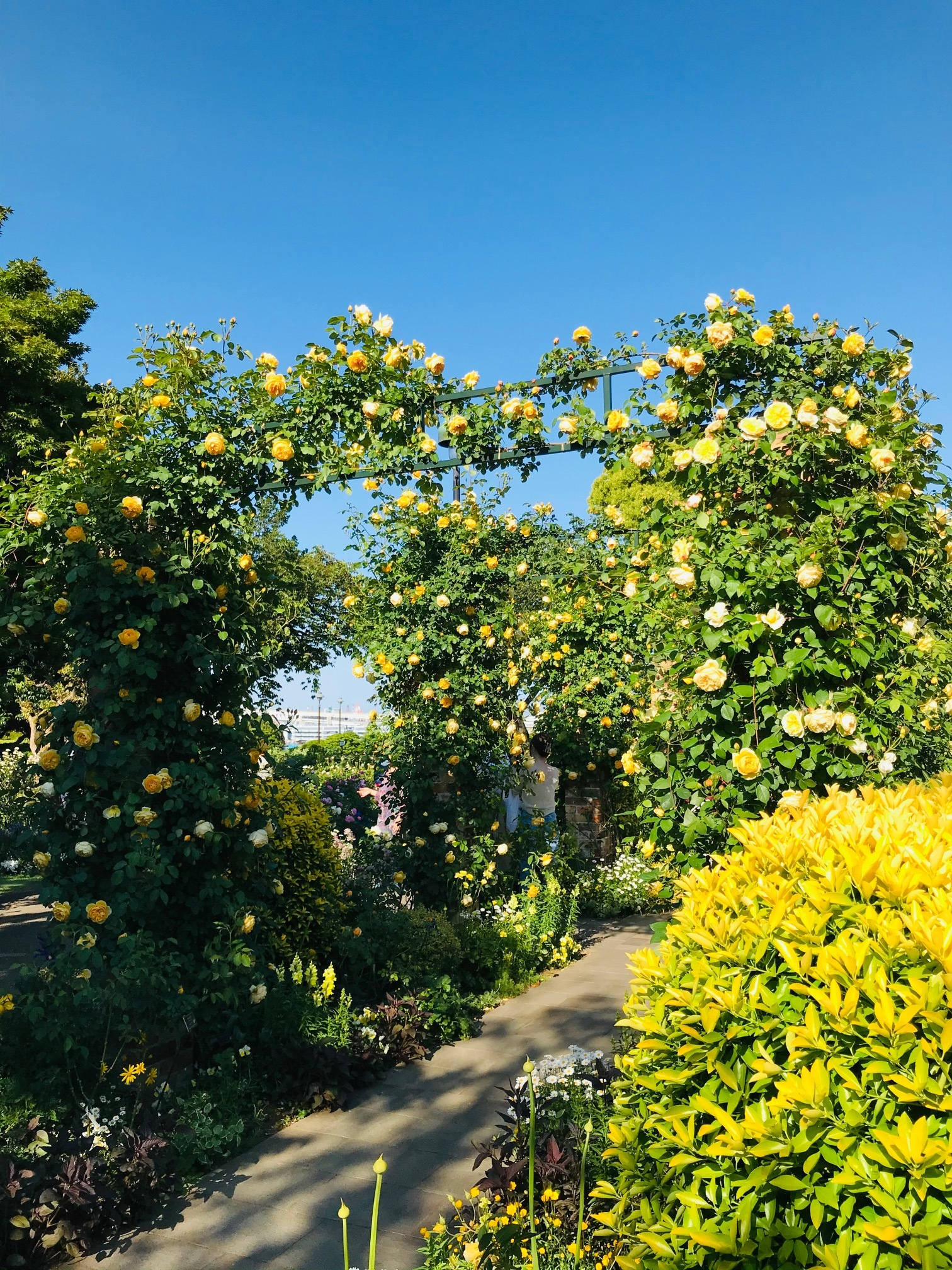 港が見える丘公園☀︎〜英国風庭園◎華やかな薔薇たち_1_2