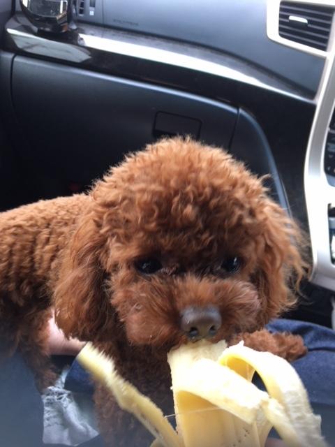 戌年なので我が家のお犬さんとドッグシャンプーをご紹介♪_1_3-1