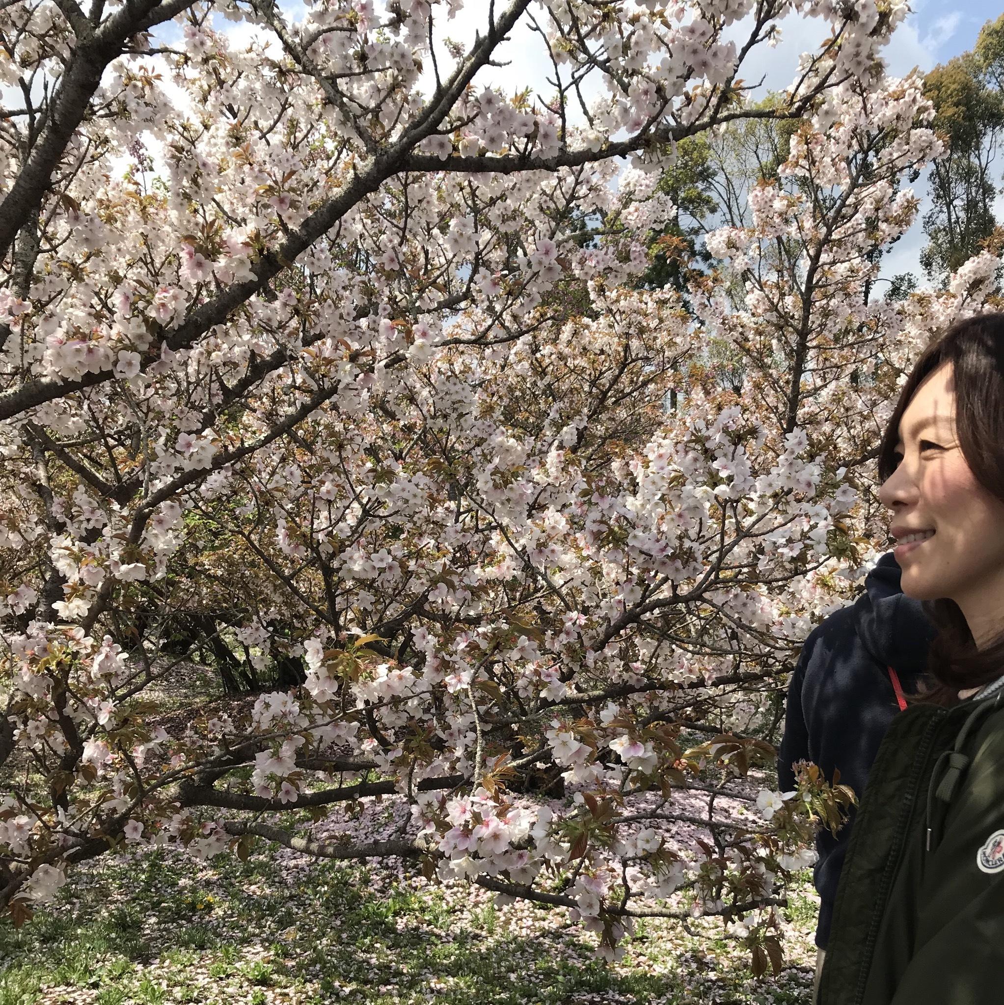 京都 仁和寺。低気温な日のお花見はパーカーが大活躍!_1_3-3