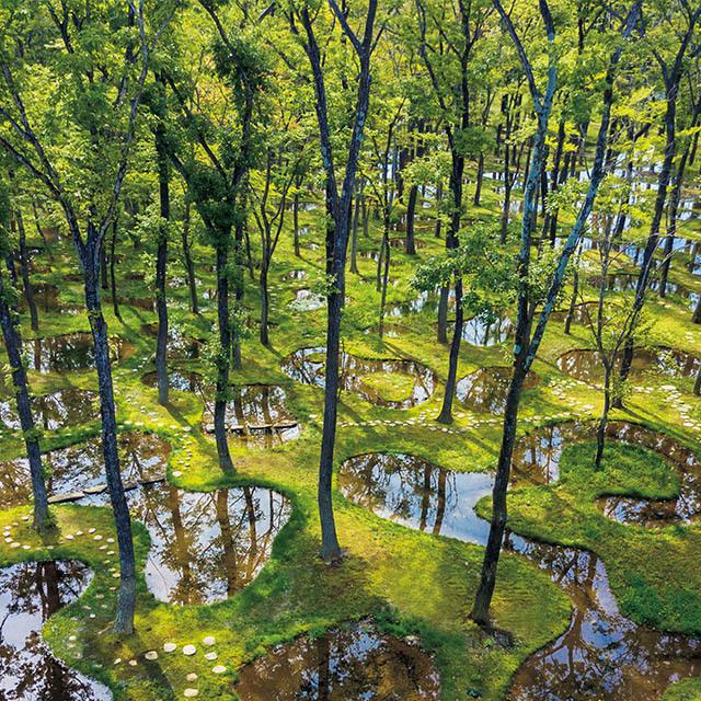 数多くの木々と160もの池からなる「水庭」は、石上純也氏の設計。