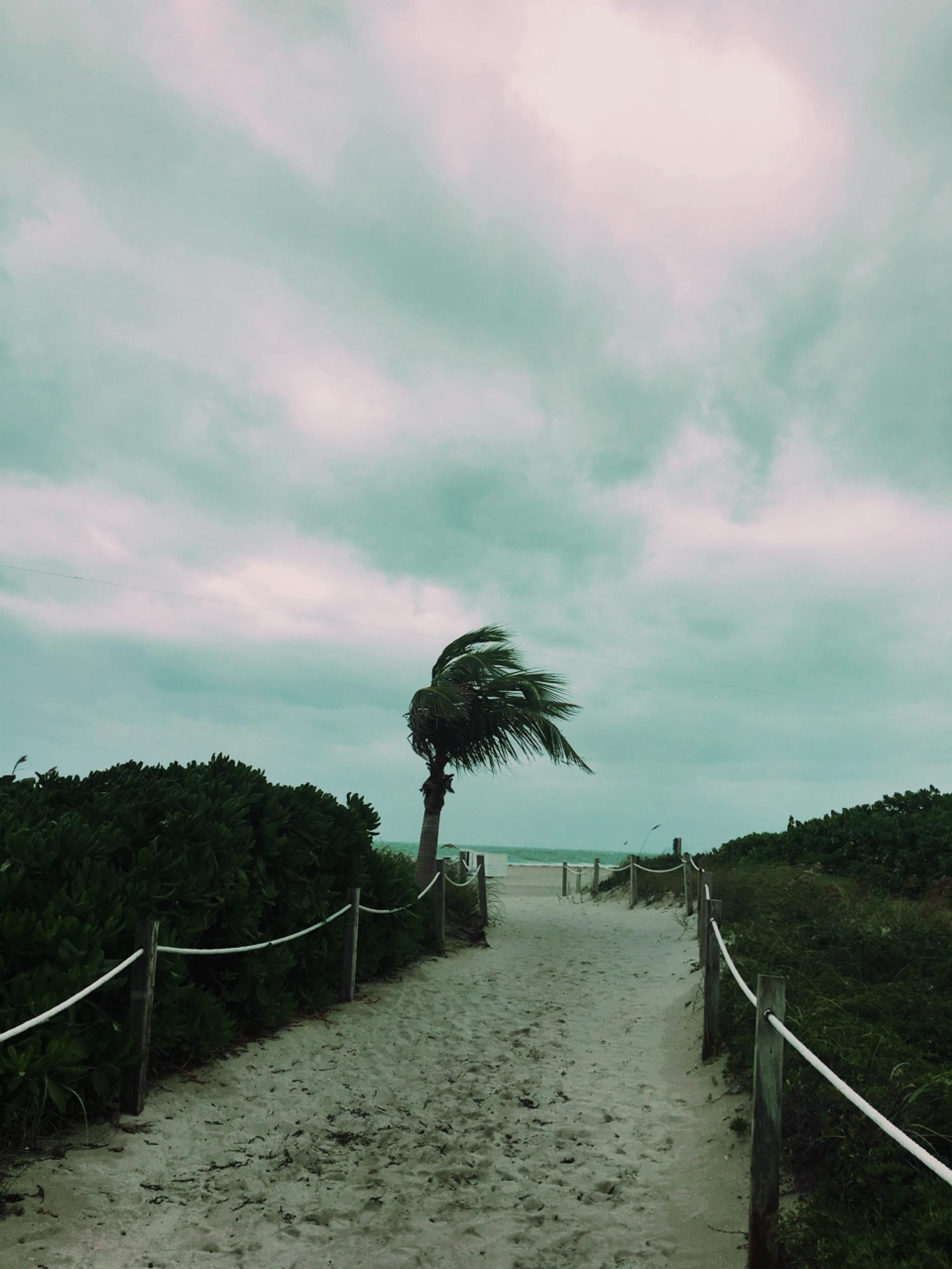 マイアミビーチにて。_1_7