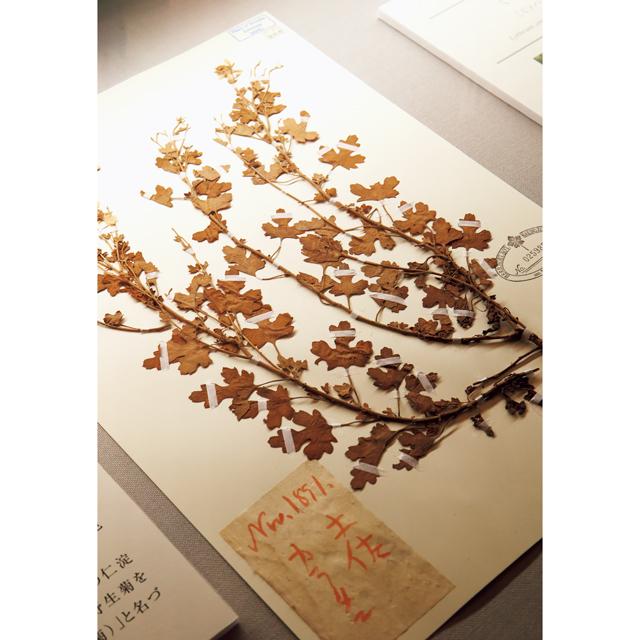 標本や美しい植物図は記念館で見ることができる
