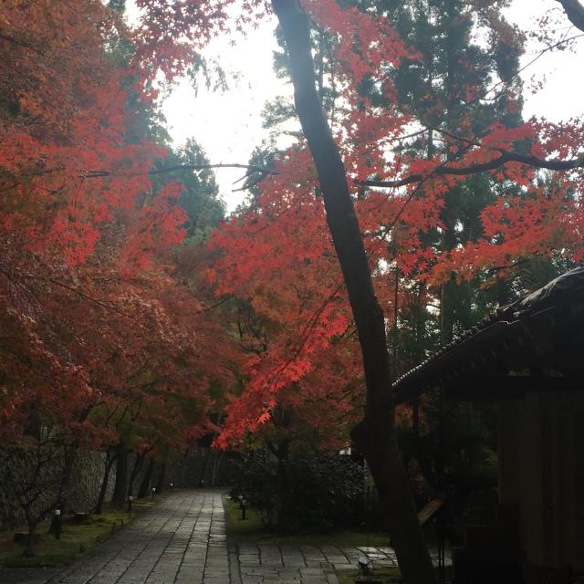 京都で思いがけず紅葉を満喫!_1_2