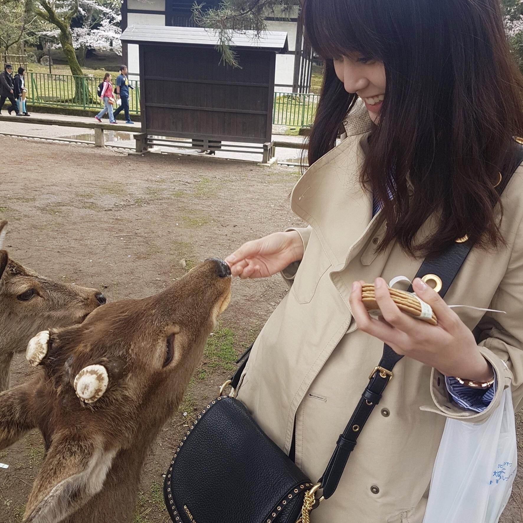 奈良の鹿と触れ合って来ました…!_1_3
