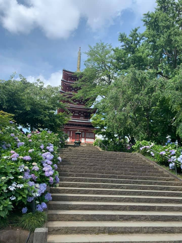 近所で小旅行気分になれる朝いちばんの紫陽花寺散歩_1_2