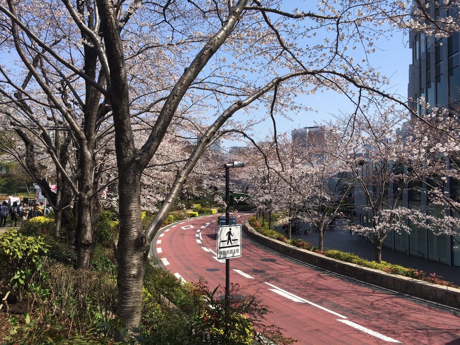 4/14まで♡東京ミッドタウンでお花見_1_1-2