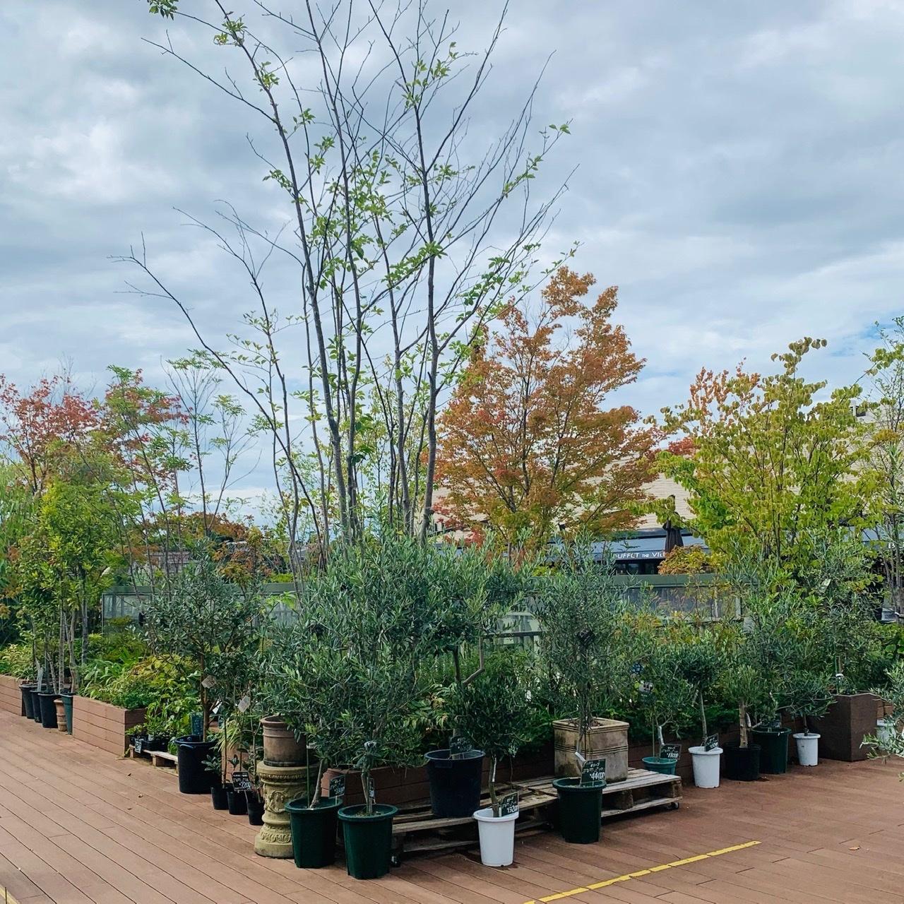 外で育つ植栽達①