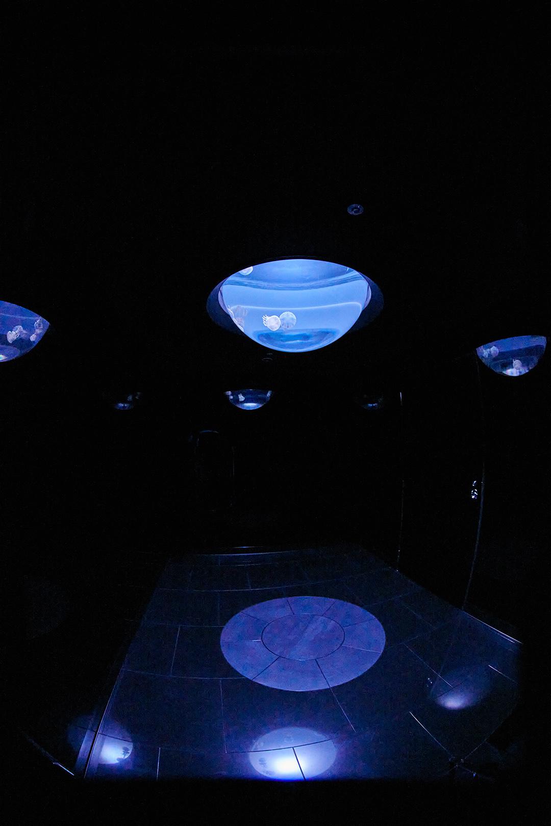 癒されたい♡ サンシャイン水族館の新クラゲエリア「海月空感」の魅力を徹底解説!_1_7