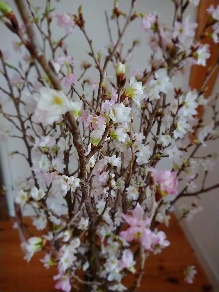 春財布で運気アップ_1_4-2
