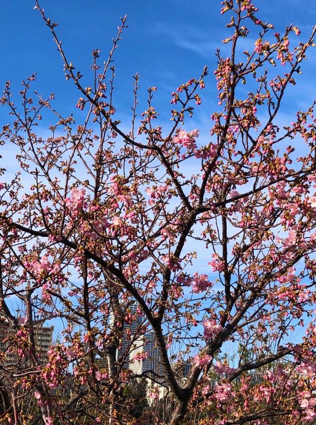 春まで着れるオレンジコーディネート_1_2
