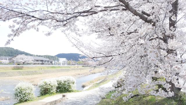 【番外編】古都 京都 鴨川を巡る桜旅 2021.3_1_2
