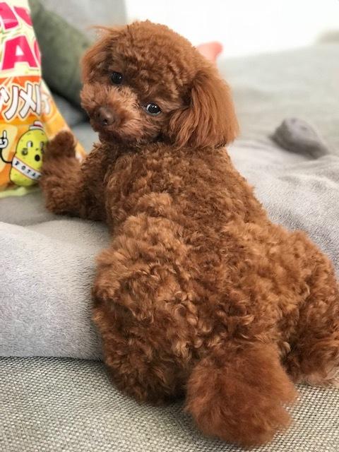 戌年なので我が家のお犬さんとドッグシャンプーをご紹介♪_1_2-3