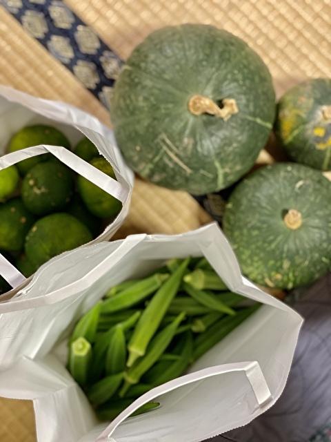 お庭で収穫した野菜たち!