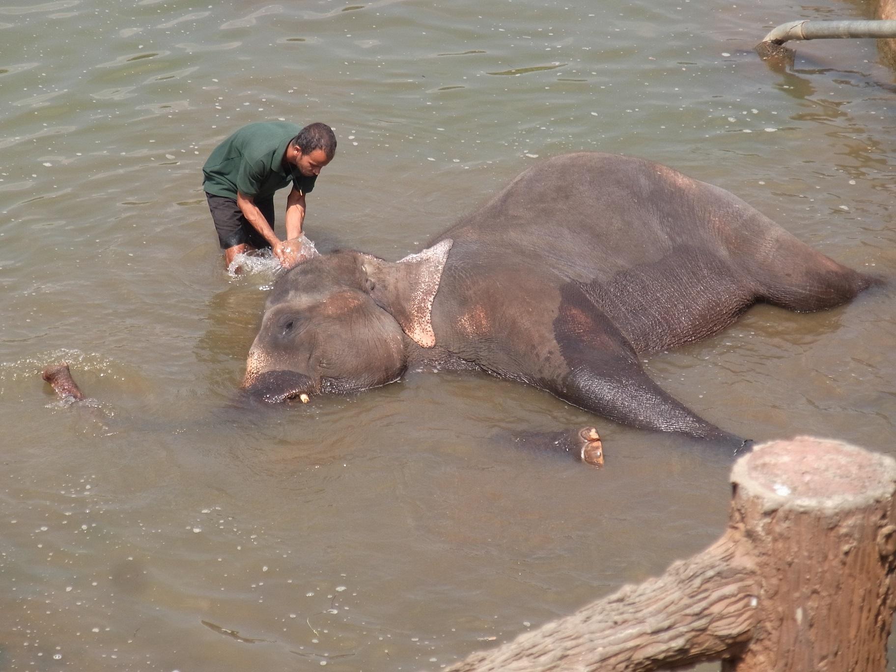ピンナワラの象の孤児院@スリランカ_1_4