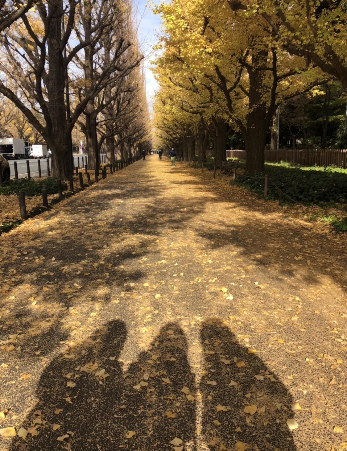 【外苑前】銀杏並木を見てきました!_1_1