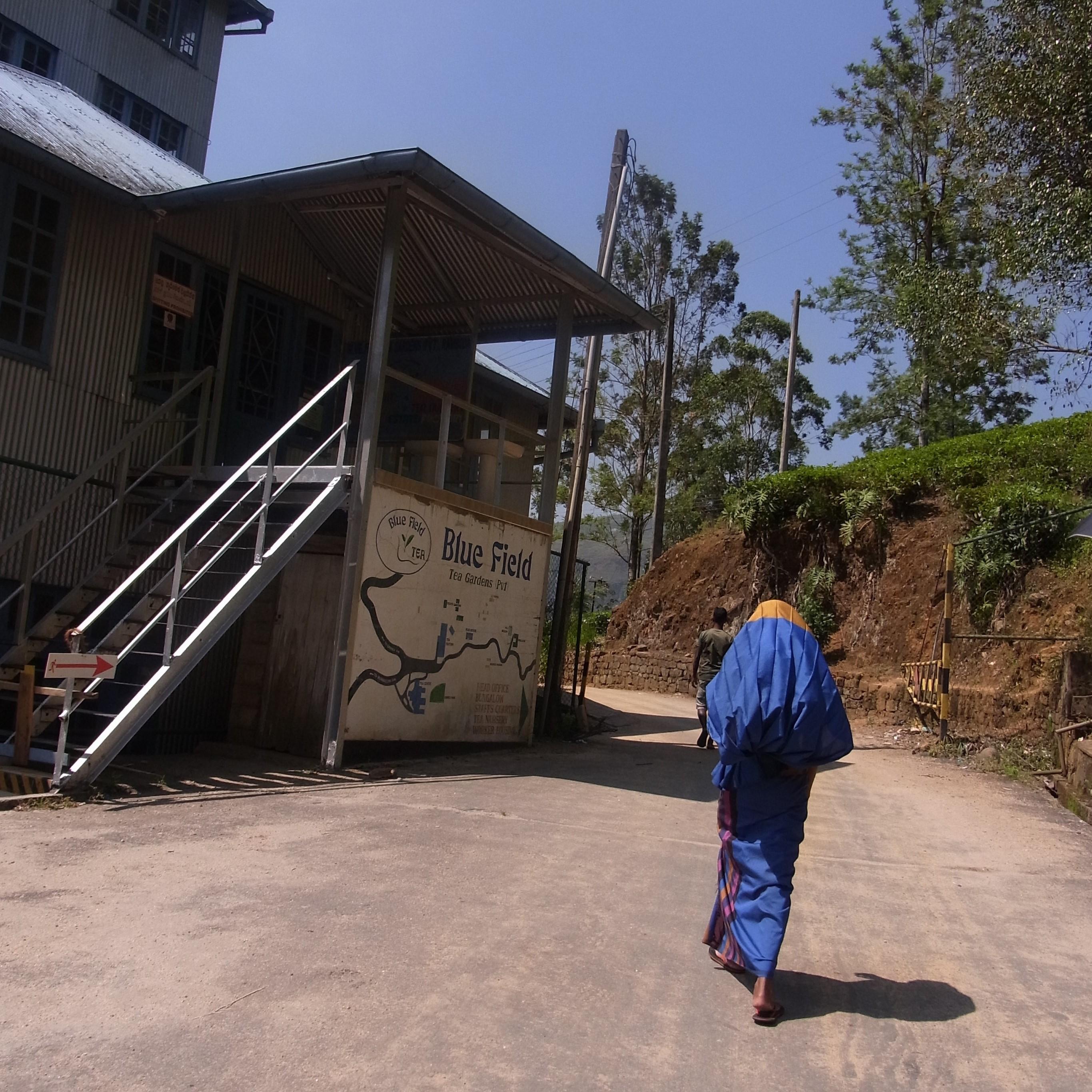 紅茶畑と工場@スリランカ_1_3