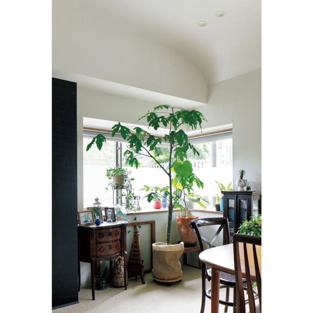 アンティーク家具や植物を置いたコーナー