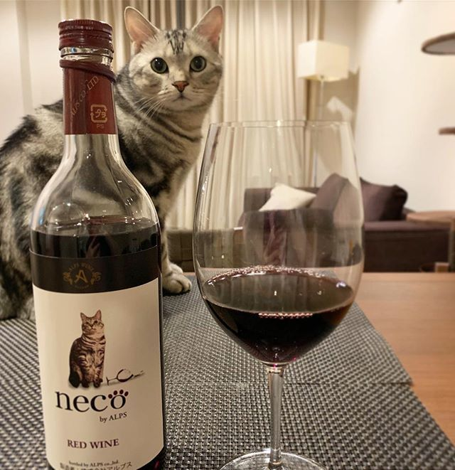 ワインのモデルに⁉_1_1