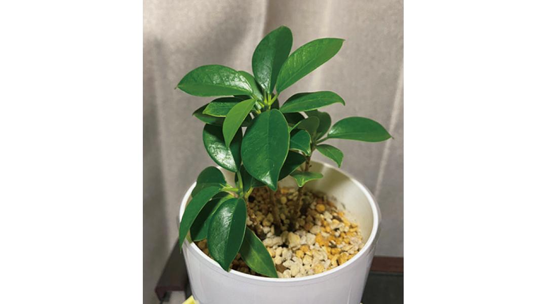 新川優愛は大好きな植物について勉強したい