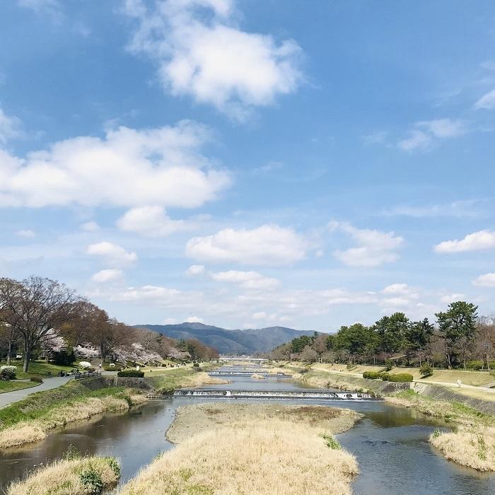京都『桜』便り_1_1