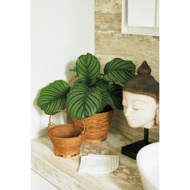 バスルームにはカラテア・オルビフォリアとミャンマーの仏像