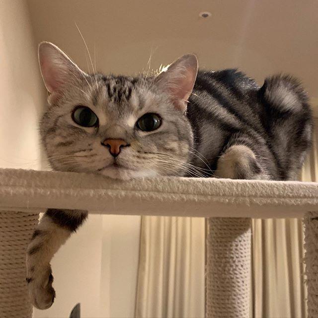 のんびり過ごすエクラ編集長の愛猫、アラン