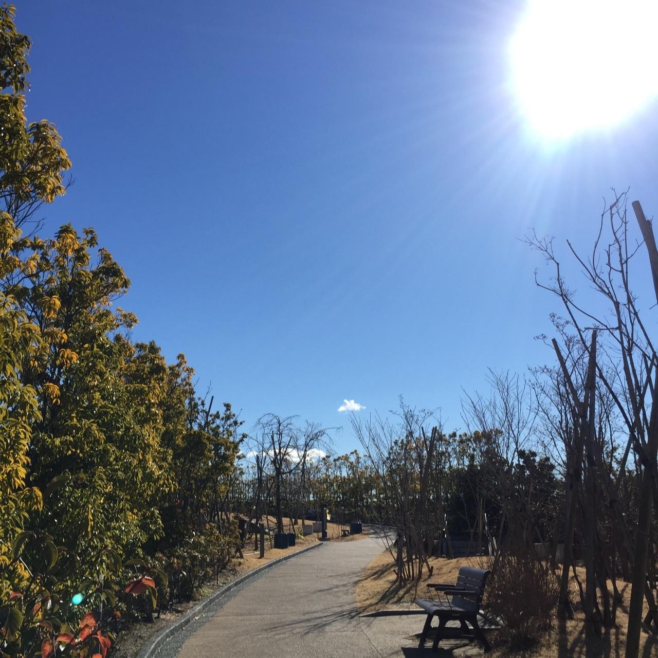 澄んだ青空が広がる冬日の素敵ランチは空に近い場所で_1_1-1