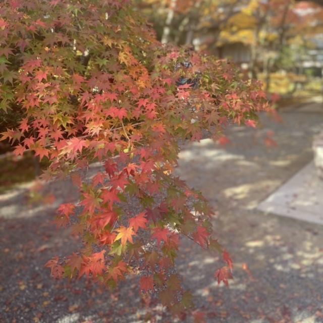 感染症対策しながらGoToトラベルで京都へ_1_2