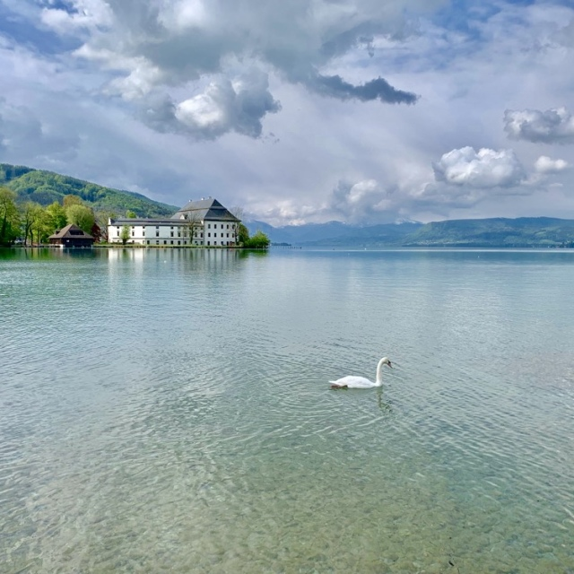 ウィーン レオポルド美術館 シーレ クリムト アッター湖