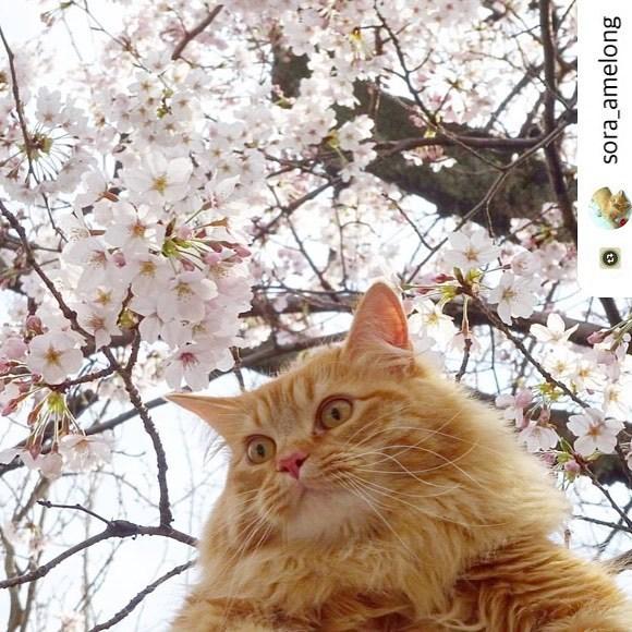 にゃんスタ写真 桜の木の下で