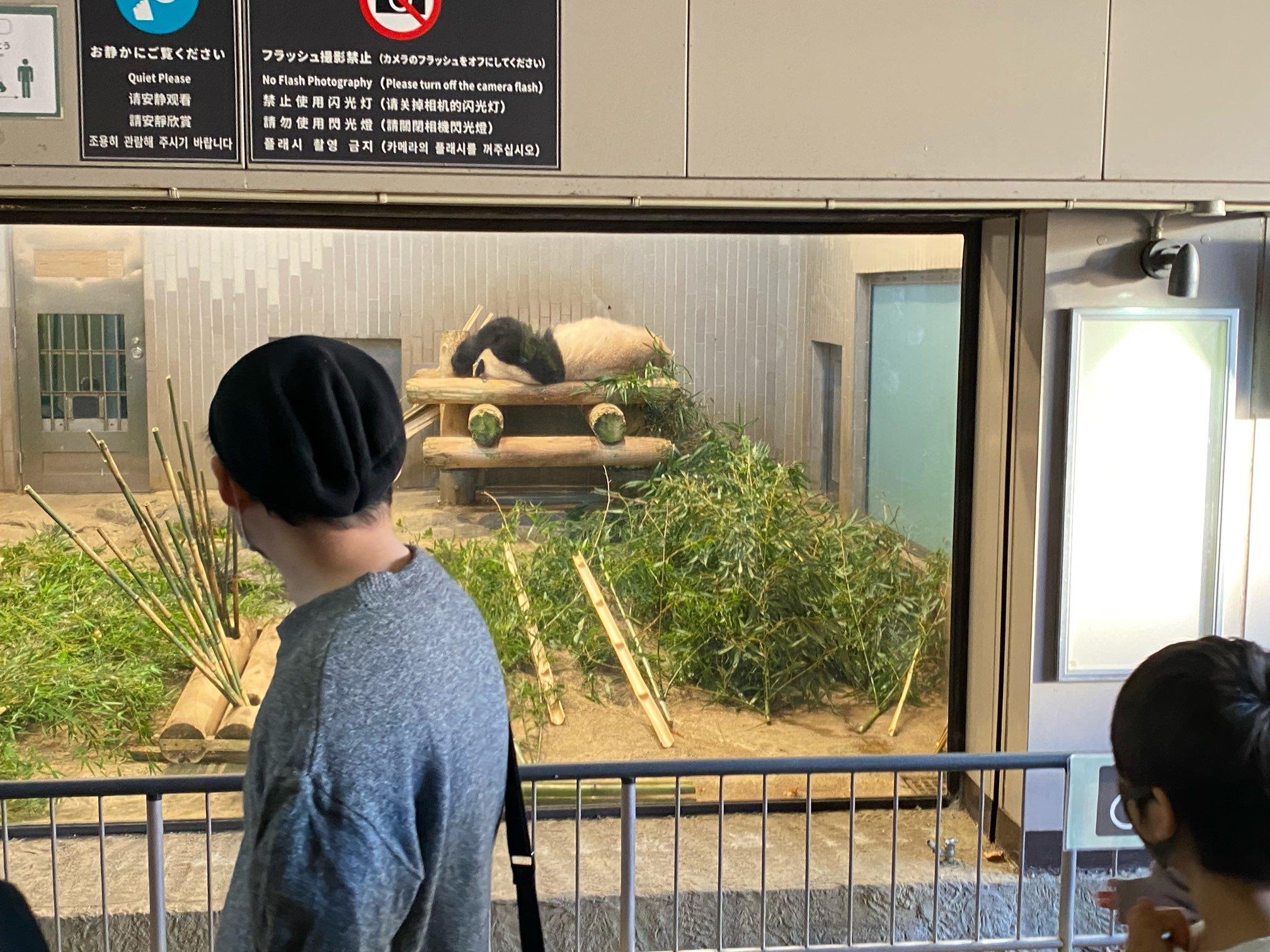 【上野動物園】シャンシャンが帰国する前に!!_1_3