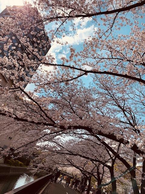 そうだ!桜を見に皇居へいこう♪_1_1-3