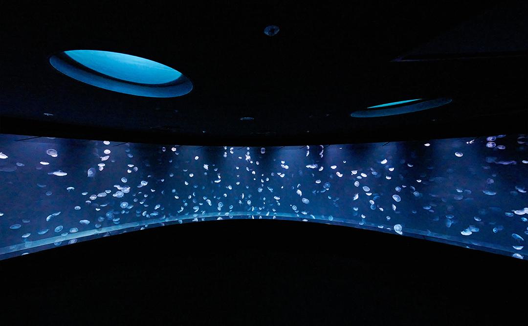 癒されたい♡ サンシャイン水族館の新クラゲエリア「海月空感」の魅力を徹底解説!_1_2