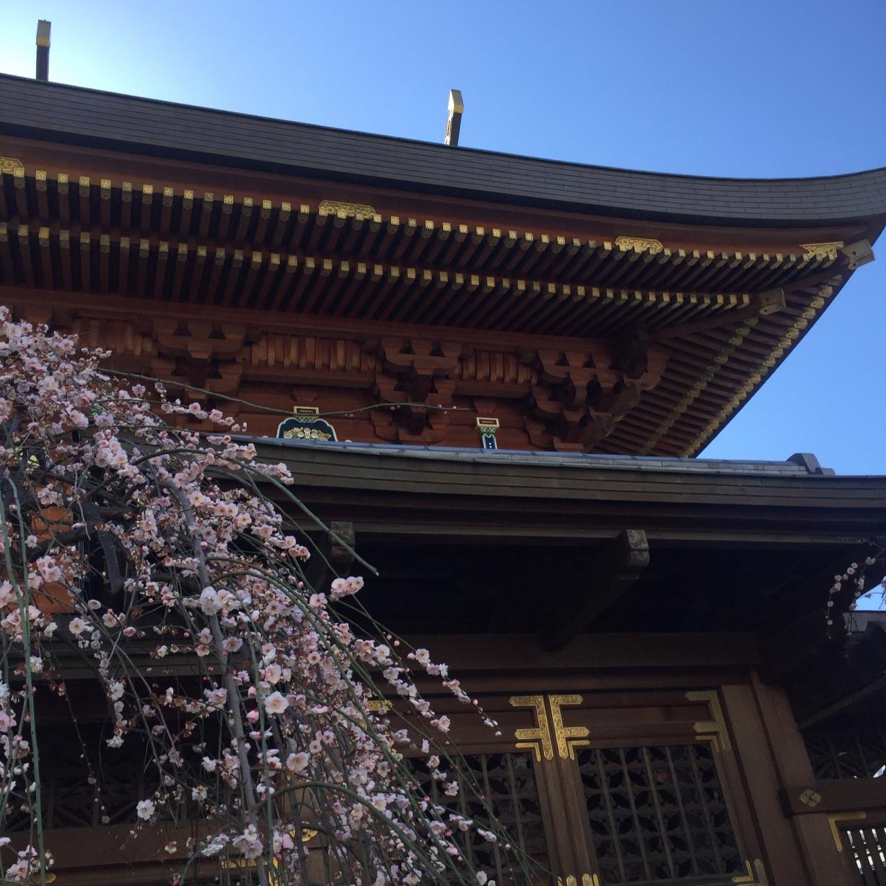 大島紬で下町さんぽ_1_1-1