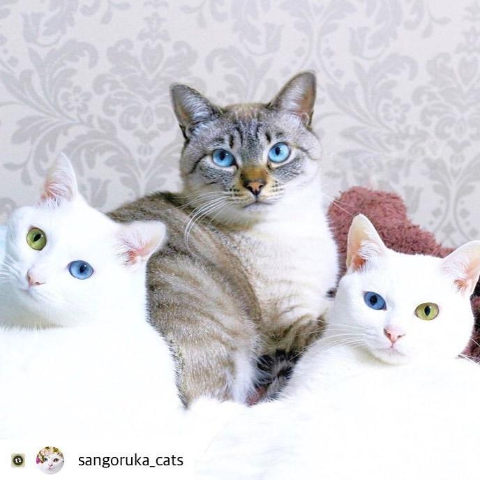 にゃんスタ 保護猫