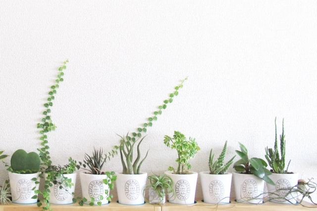 植物のある暮らし。Jマダムは断然〇〇派!_1_1