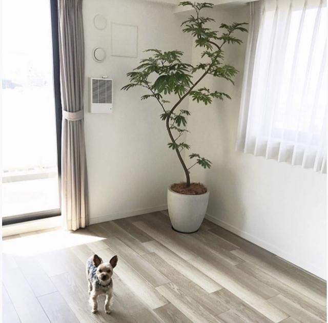 植物と心地良く暮らす。【40代 私の暮らし】_1_1