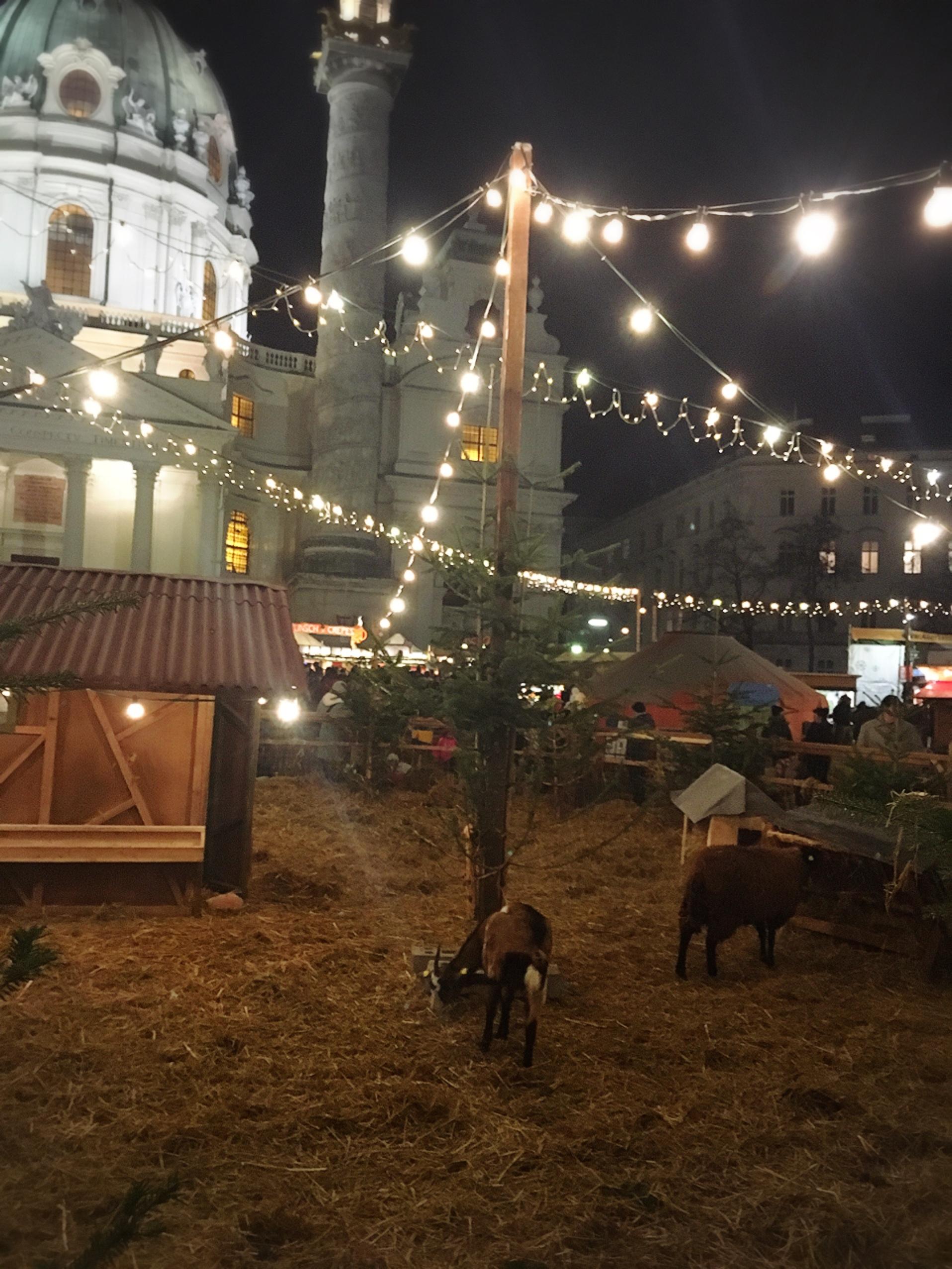 ウィーンのカールス教会のクリスマスマーケット_1_4