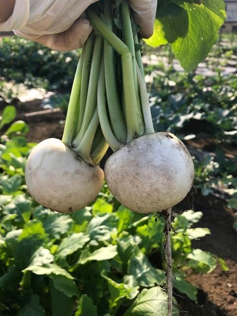 私の趣味は・・安心の無農薬野菜を育てることです_1_3