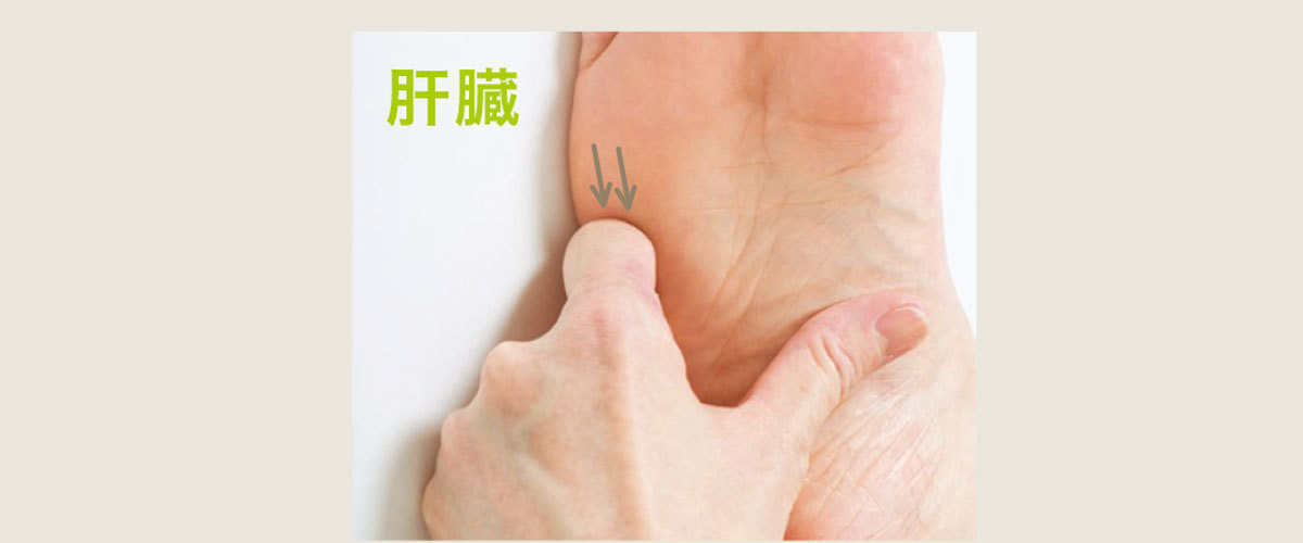 肝臓のツボ